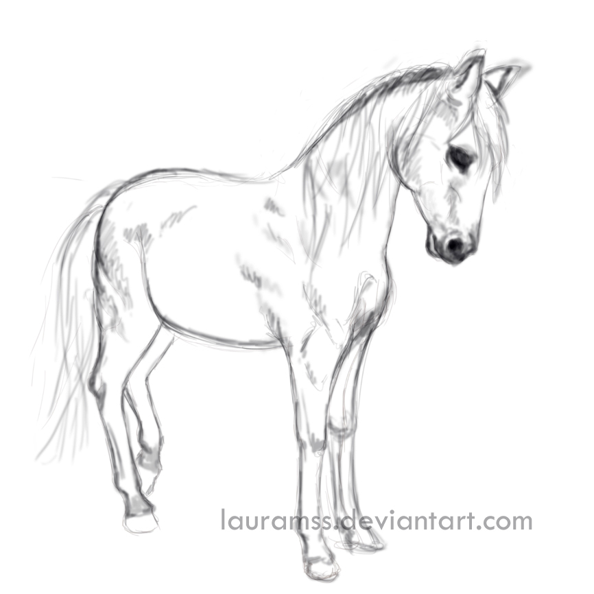 866x866 Standing Horse Sketch By Lauramss