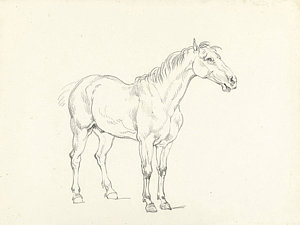 300x225 Study Of A Standing Horse, Right, Hendrik Voogd Drawing By Quint Lox