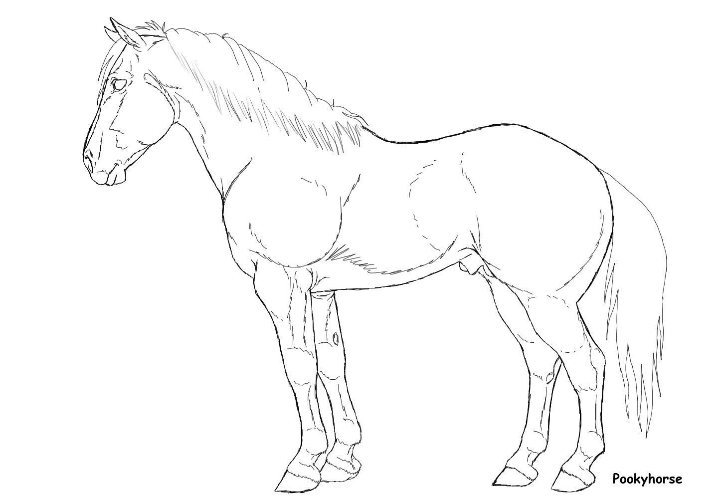 1440x1008 Stock Horse Stallion Lineart By Pookyhorse