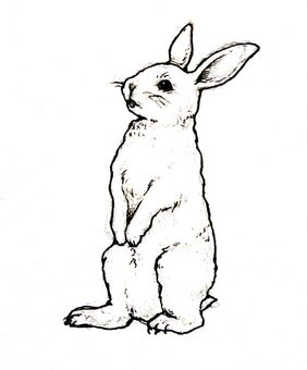 282x340 Free Cliparts Rabbit, Rabbit