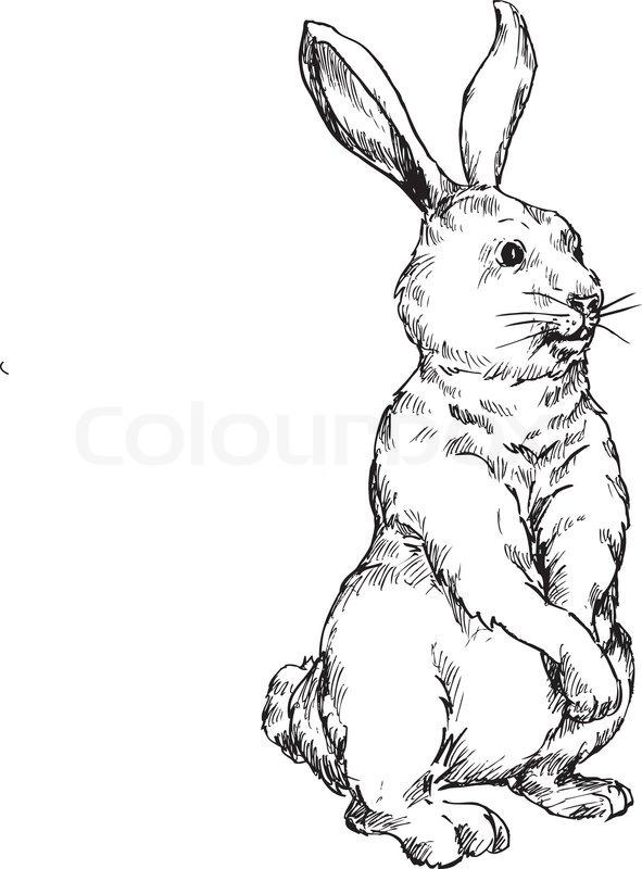 591x800 Hand Drawn Rabbit Stock Vector Colourbox