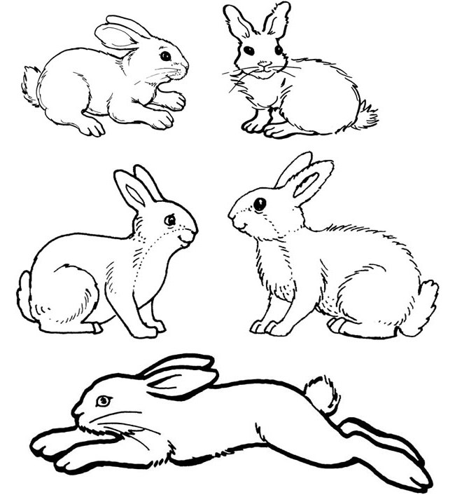 small bunny coloring pages - photo#27
