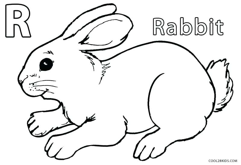 800x548 Bunnies Coloring Pages Rabbit Standing Baby Lola