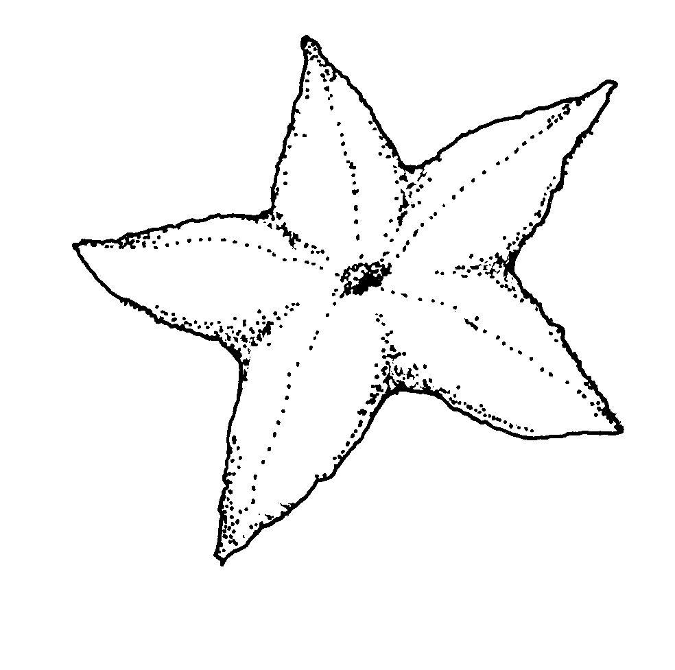 984x977 Free Printable Starfish Coloring Pages For Kids