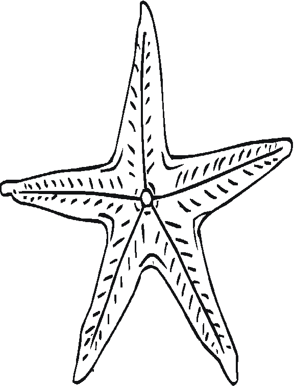 576x756 Starfish