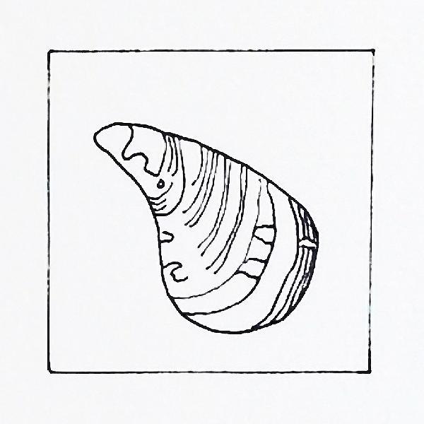 600x600 Starfish Line Drawing Alison Collins