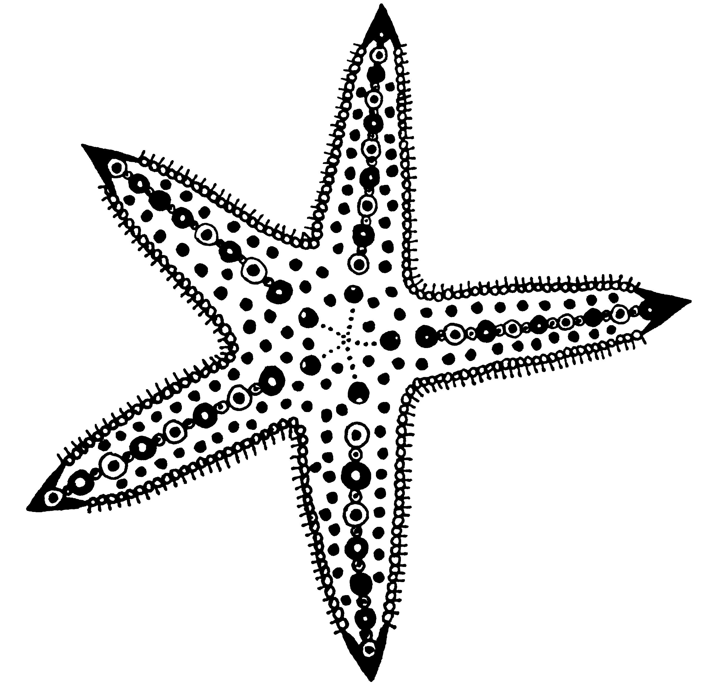 2648x2616 Starfish Line Drawing