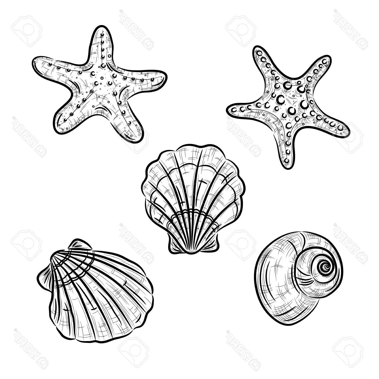 1300x1300 Top Sketch Of Starfish Scallop And Snail Stock Vector Cdr