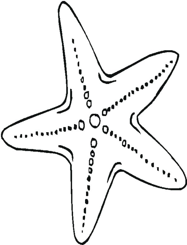 600x788 Starfish Coloring Pages Starfish Template All Shell Coloring Pages