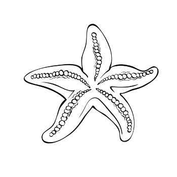 Starfish Line Drawing