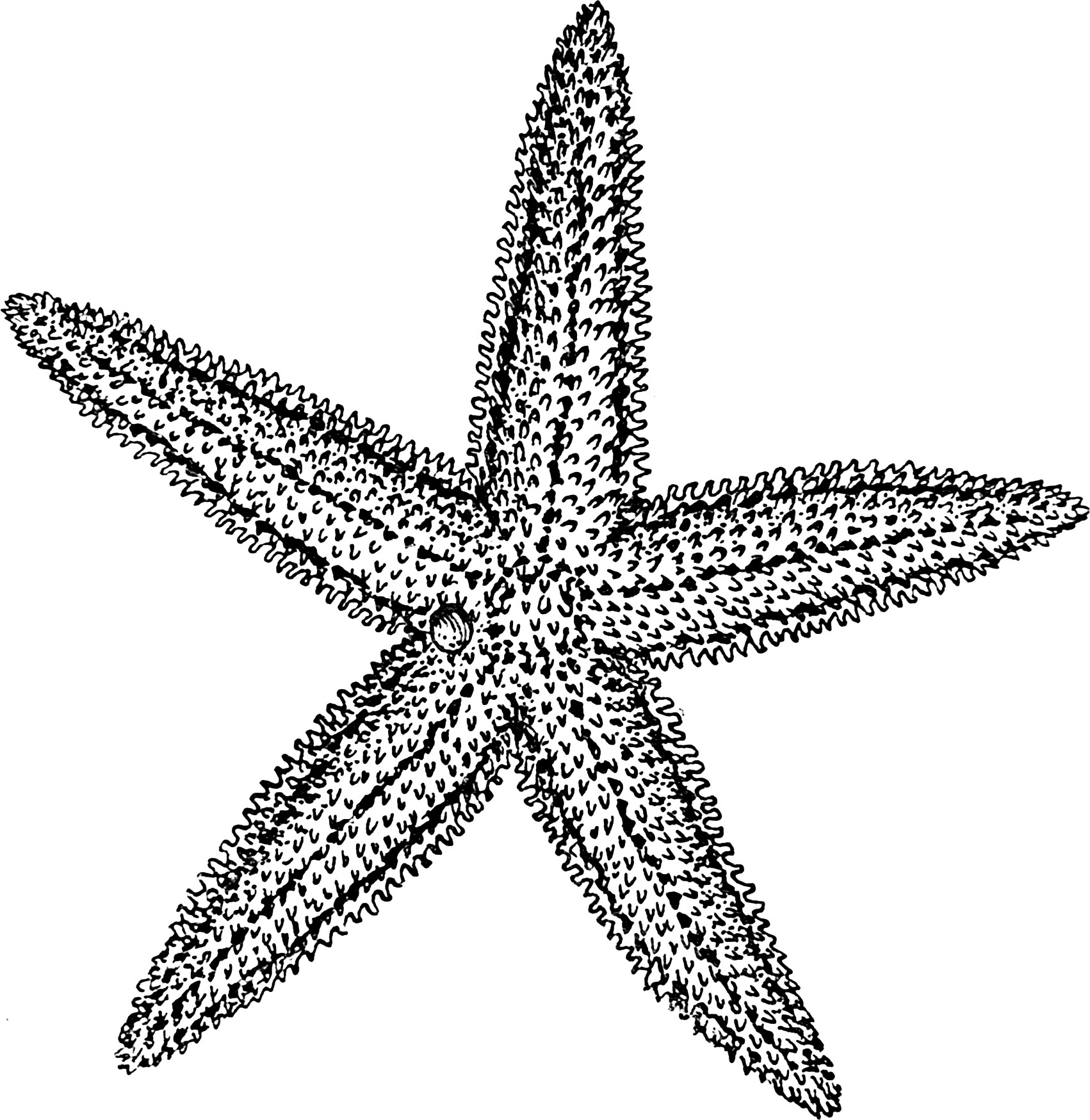 Starfish Line Drawing at GetDrawings.com | Free for personal use ...