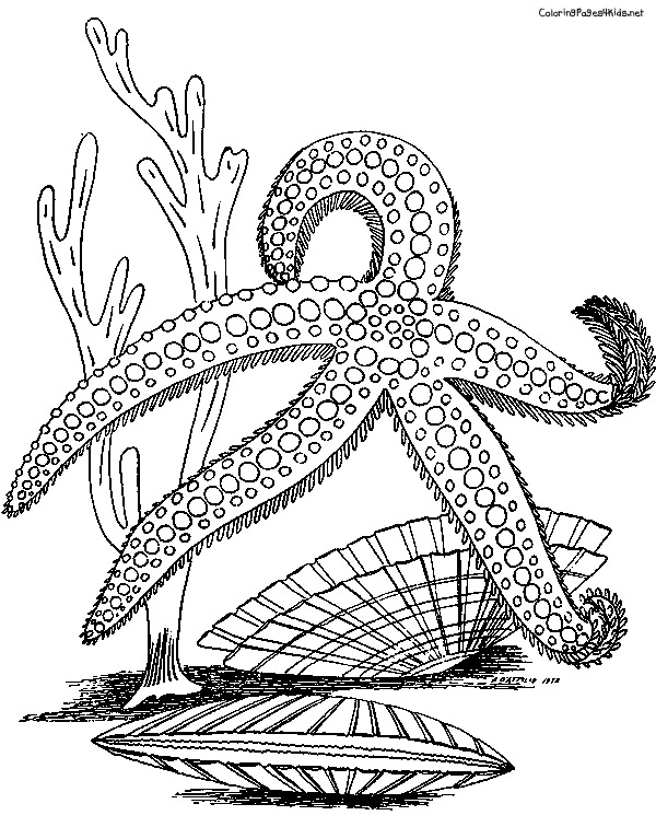 600x756 Adult Coloring Starfish Adult Coloring Fish Pictures To Print