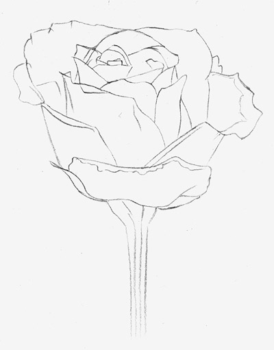 400x511 How To Draw A Rose Learn To Draw Rose Pencil Drawings Art Is Fun