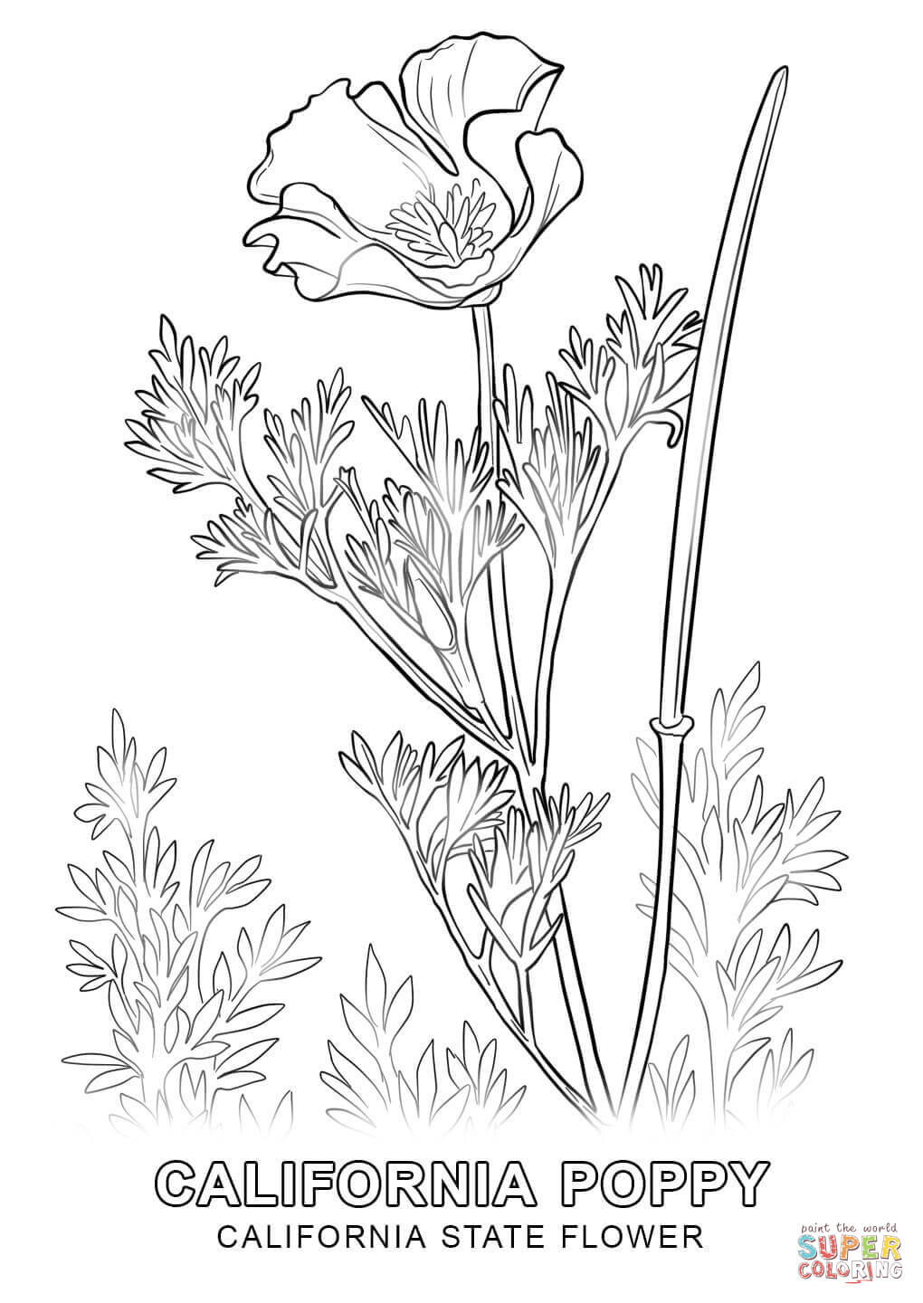 1020x1440 California State Flower Coloring Page Free Printable Coloring Pages