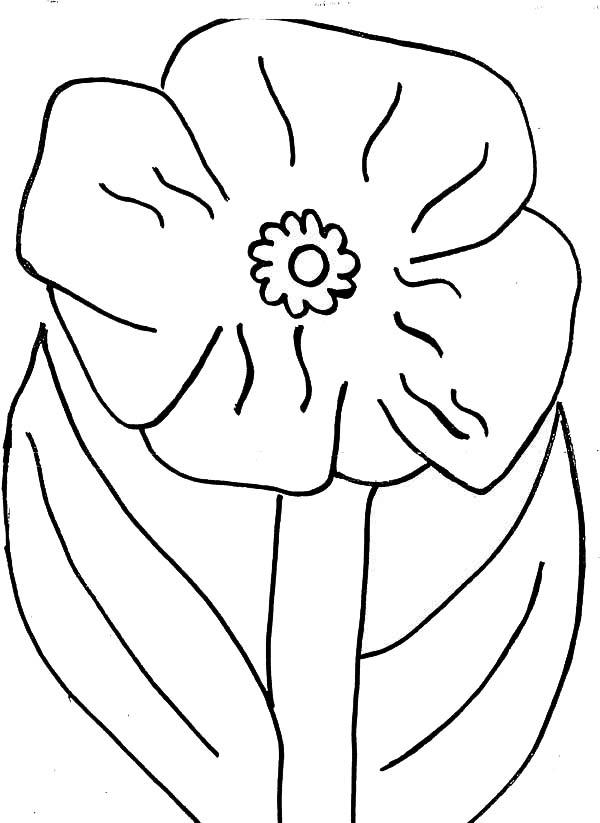 600x823 Poppy Flower Picture Coloring Page Color Luna