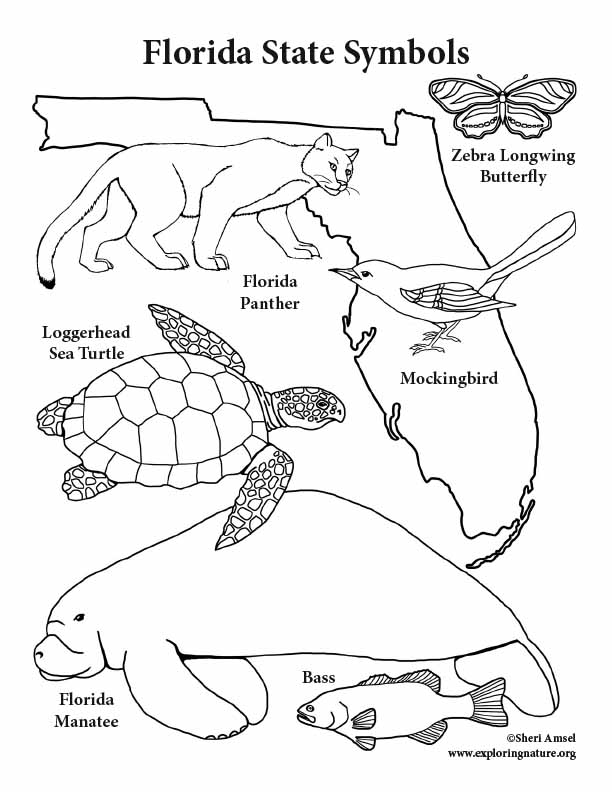 612x792 Florida State Symbols Coloring Page