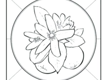 440x330 Beautiful Florida State Symbols Coloring Pages Fee Flowers School