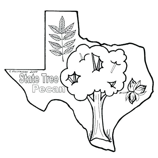 600x600 Texas Flag Coloring Sheet Click To See Printable Version Of Flag