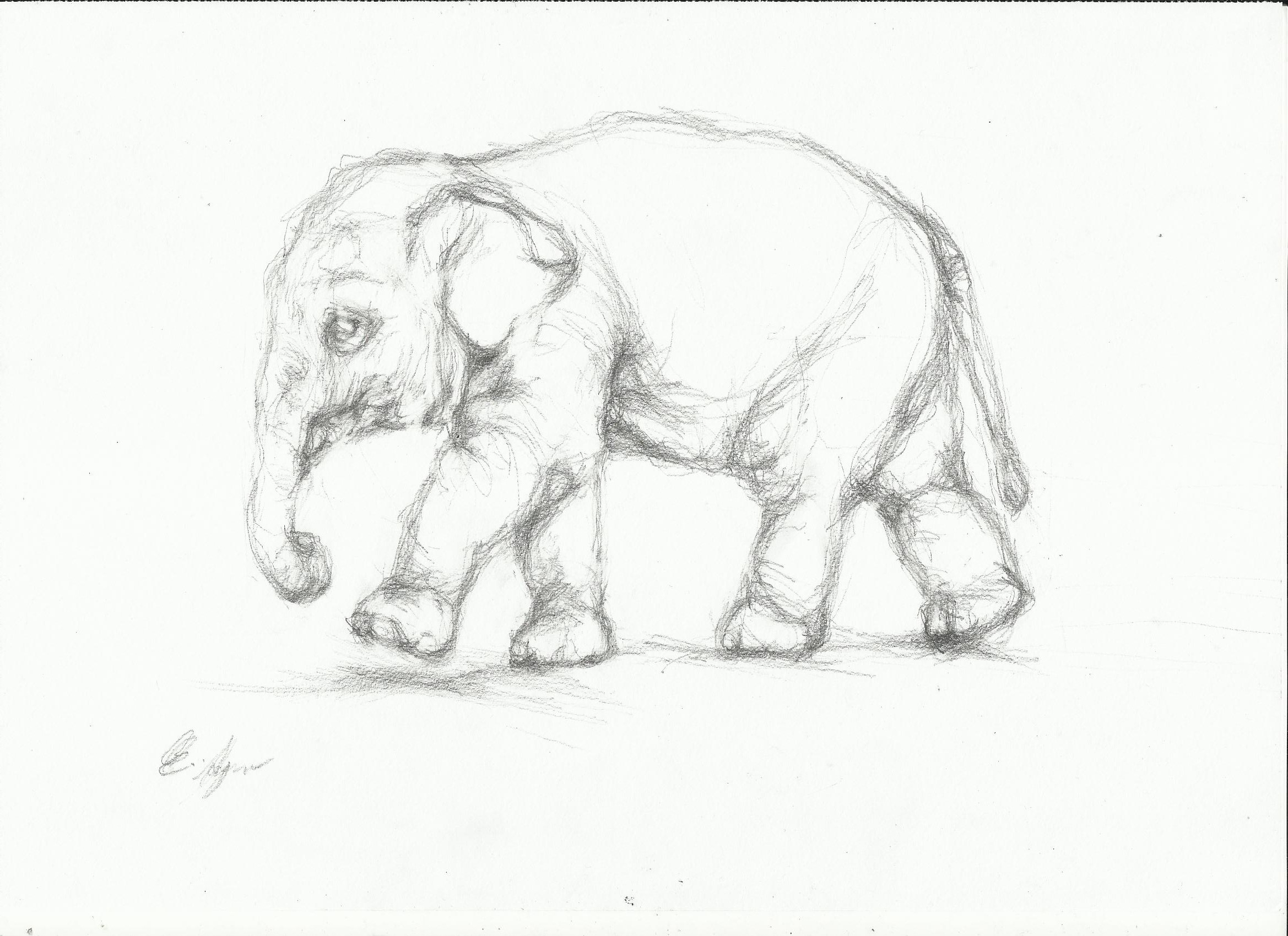 2338x1700 Pencil Drawing Of An Elephant Old Things