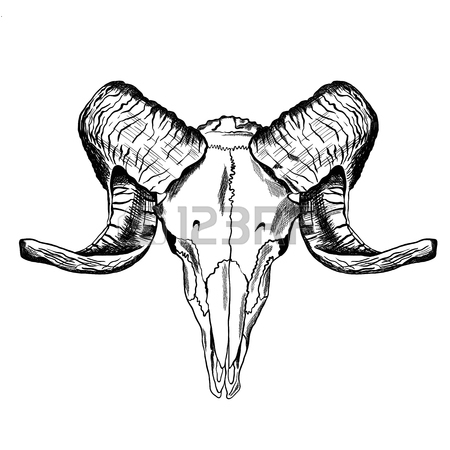 450x450 887 Cattle Skull Stock Vector Illustration And Royalty Free Cattle