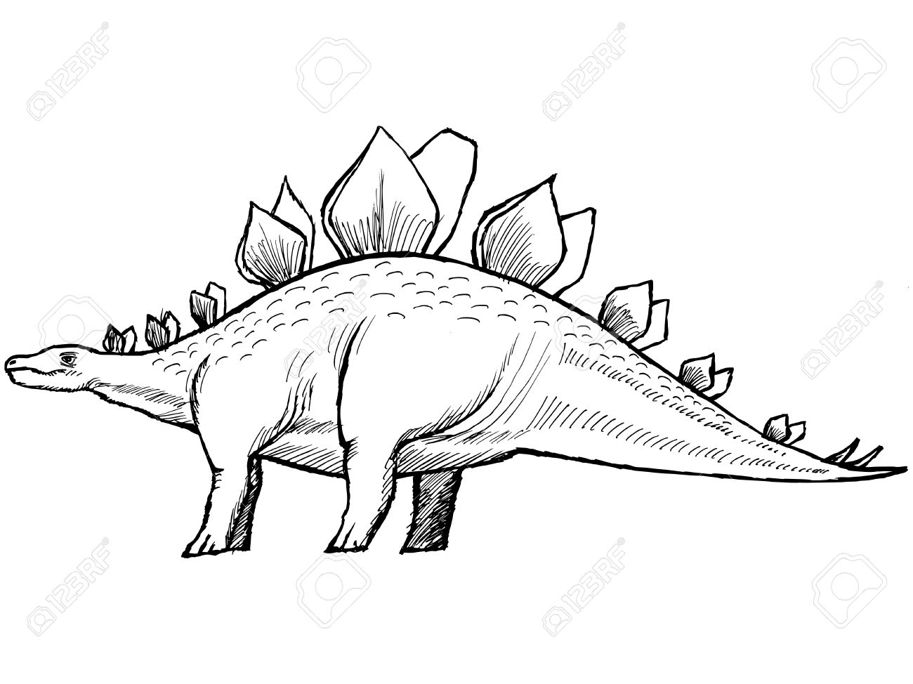 1300x974 Hand Drawn, Sketch Illustration Of Stegosaurus Royalty Free