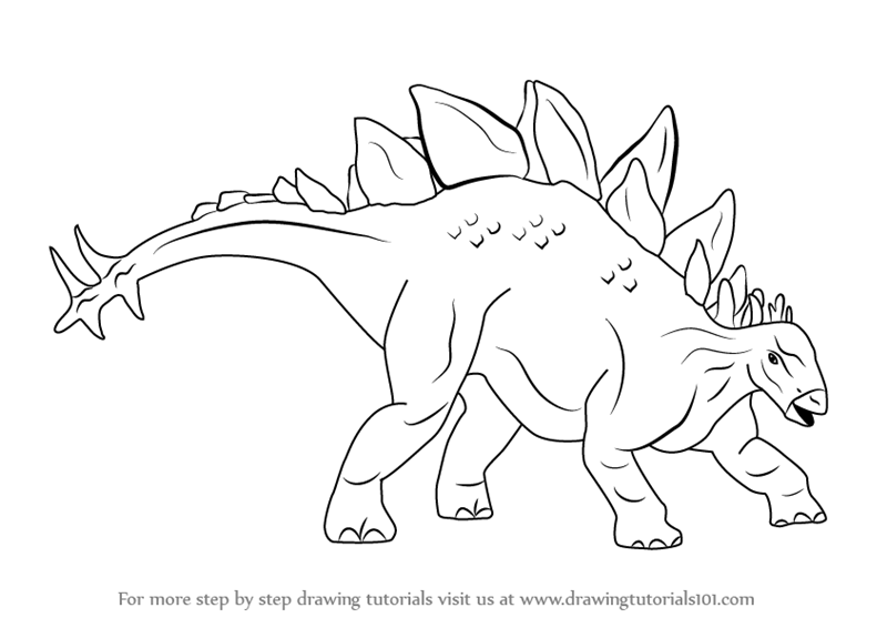 800x566 Learn How To Draw Stegosaurus Dinosaur (Dinosaurs) Step By Step
