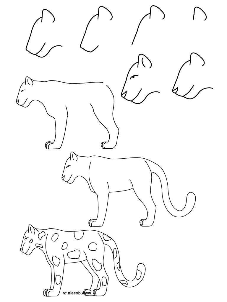 Step By Step Animals Drawing
