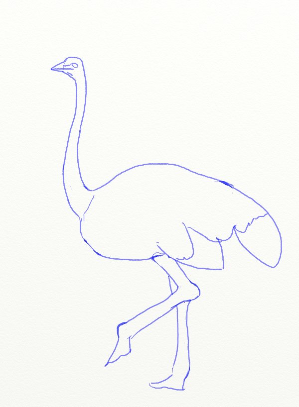 600x818 How To Draw An Ostrich