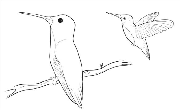 585x358 Pictures Easy Drawings Of Birds,