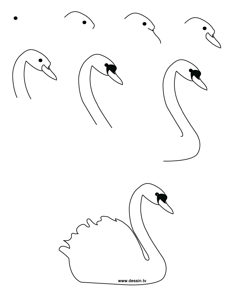 Step By Step Drawing A Bird