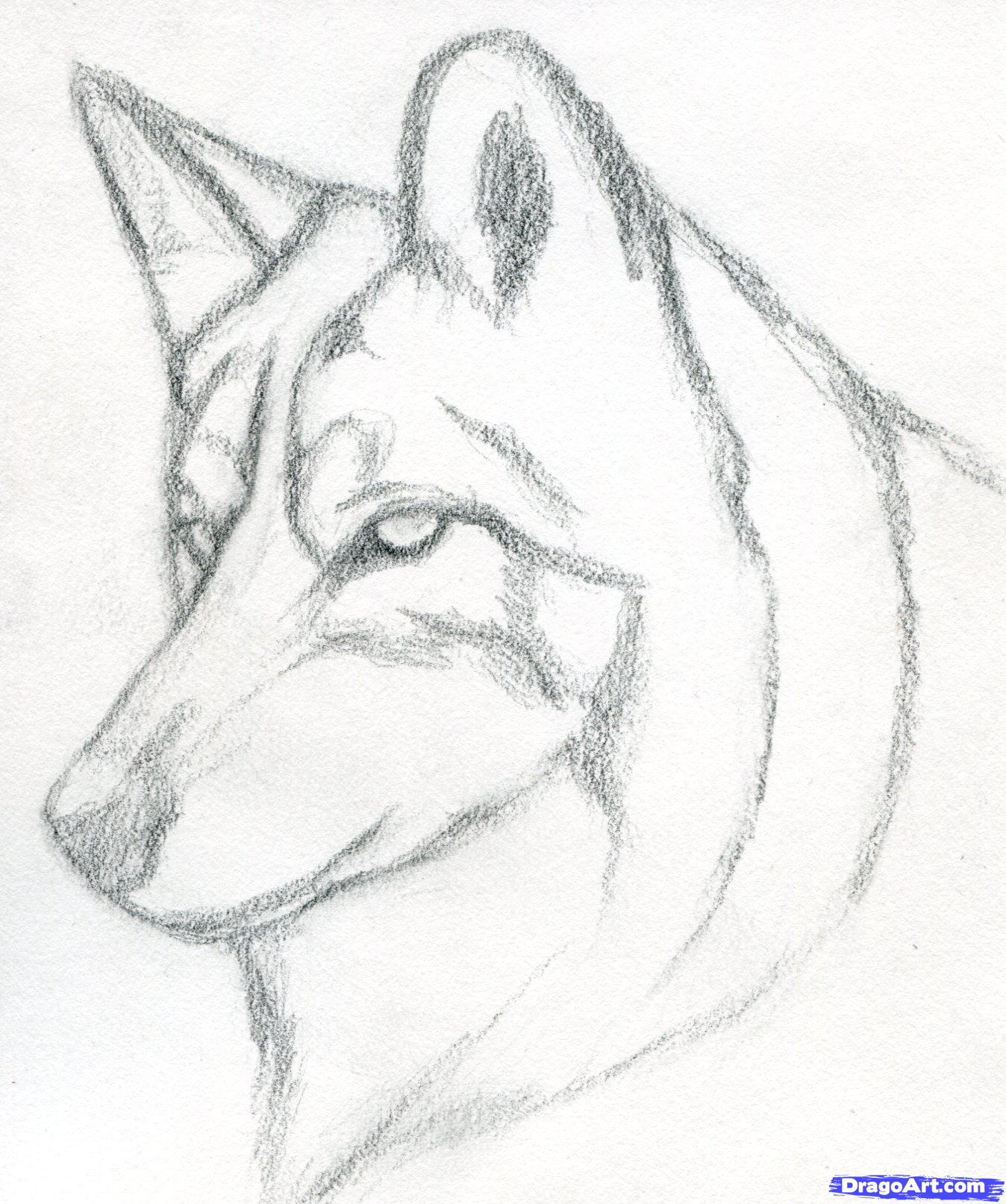 Step By Step Drawing A Wolf