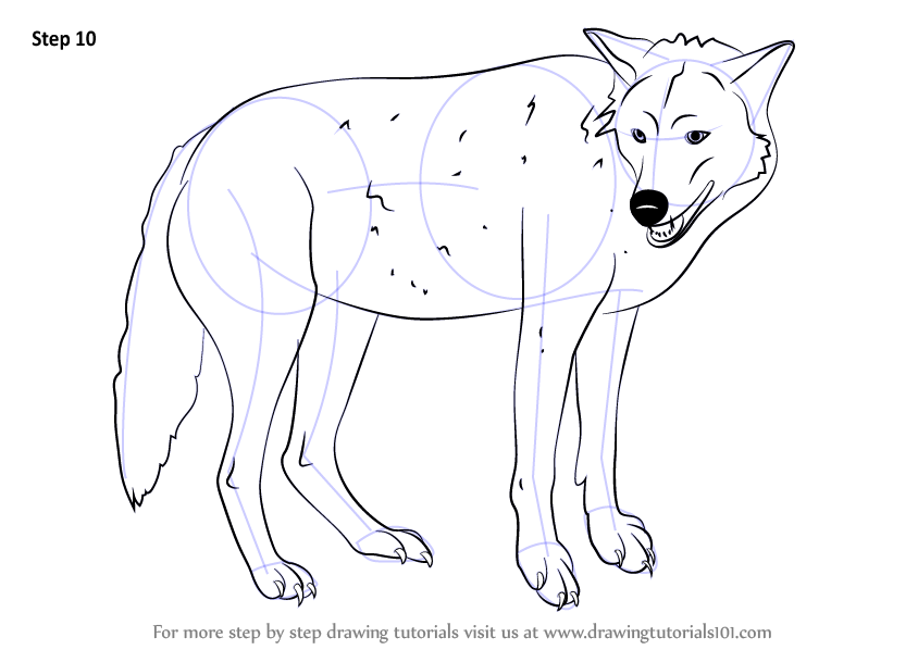 844x598 Learn How To Draw A Timber Wolf (Wild Animals) Step By Step
