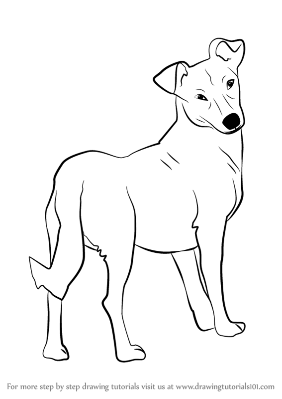 567x800 Learn How To Draw A Cute Dog (Animals For Kids) Step By Step