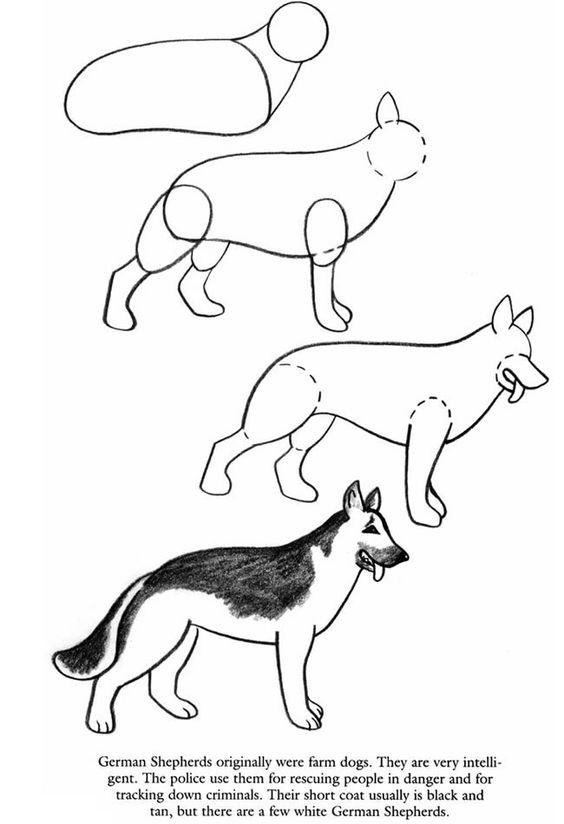 how to draw a german shepherd step by step easy