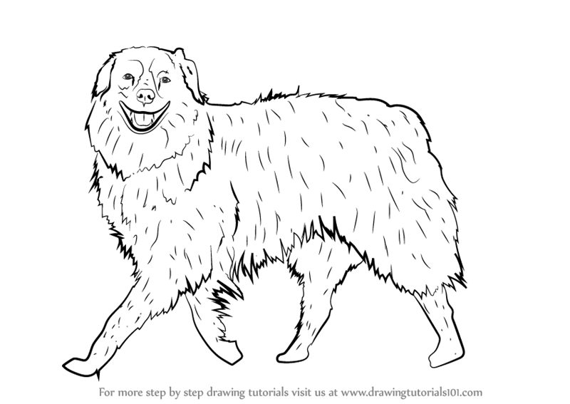 800x567 How To Draw Collie Dog Step By Step Tutorial. Drawing Cat Or