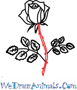 300x350 How to Draw a Rose Flower