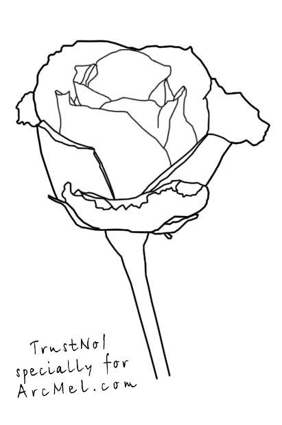 411x620 How to draw a rose step by step ARCMEL.COM