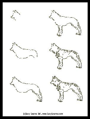 Step By Step Drawing Wolf