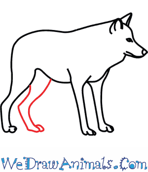 300x350 How To Draw A Mexican Wolf