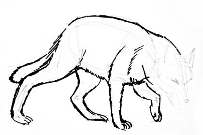 420x279 How To Draw A Gray Wolf