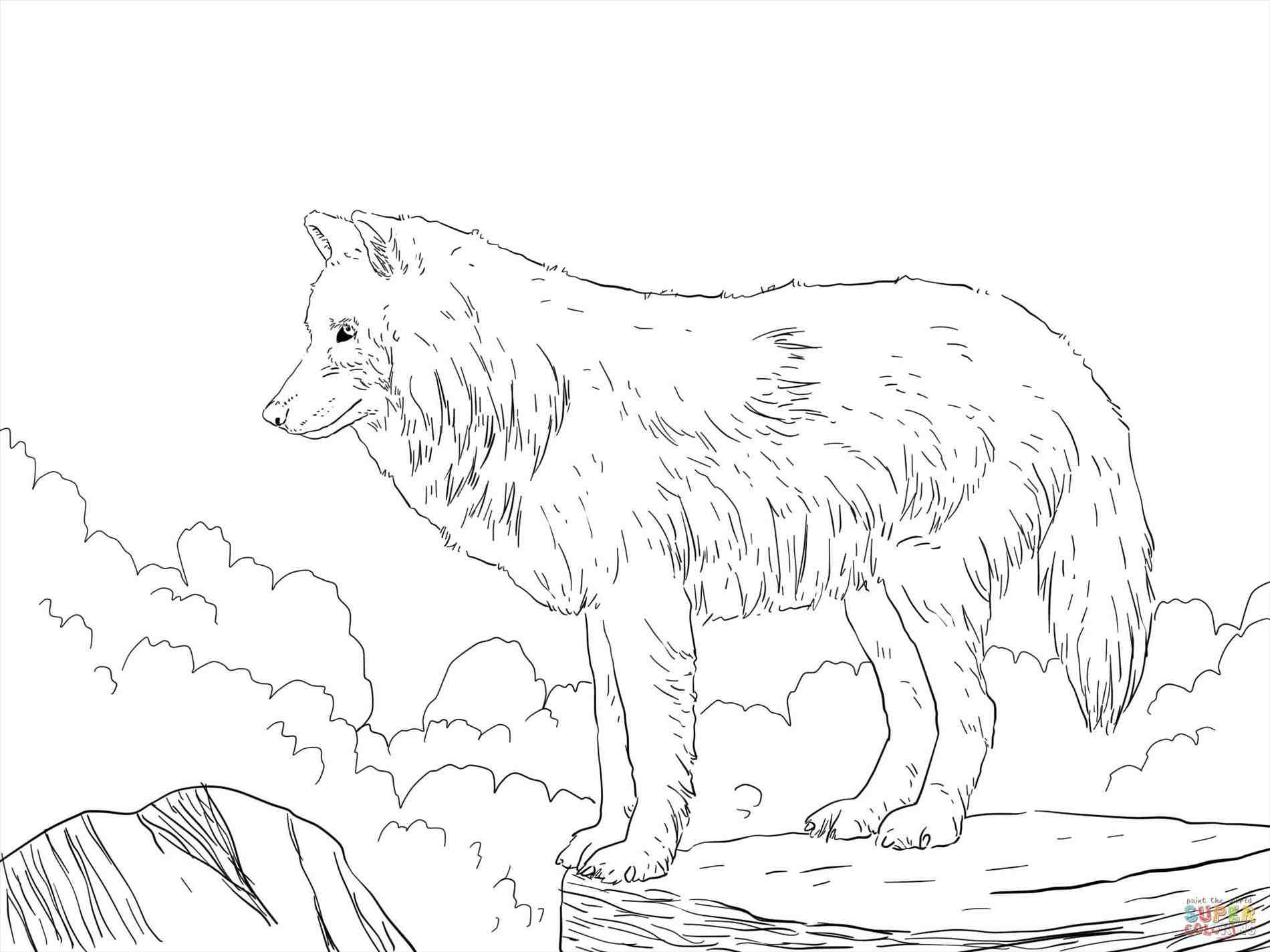 1900x1425 Arctic Wolf Drawing. Arctic Wolf Line Art Stock Illustration. How