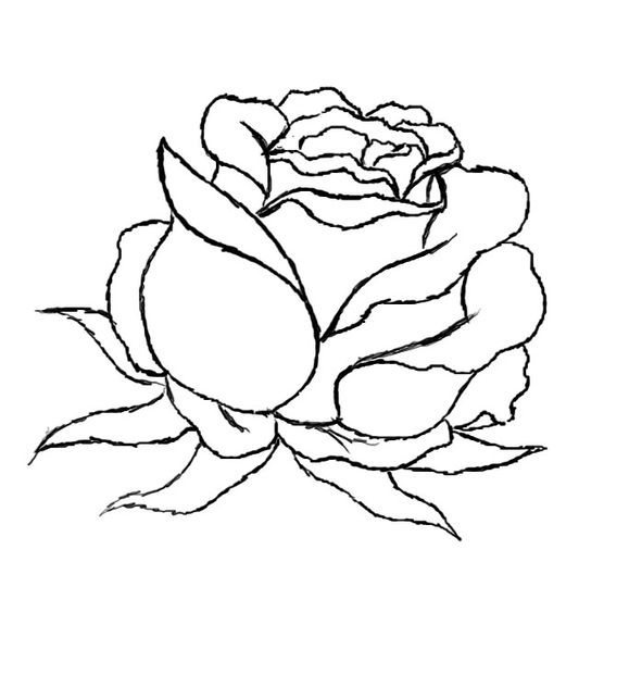 579x620 How To Draw A Red Rose Rose, Drawings And Drawing Ideas
