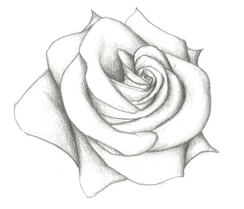 805x689 Drawing How To Draw A Realistic Rose Step By Step For Beginners