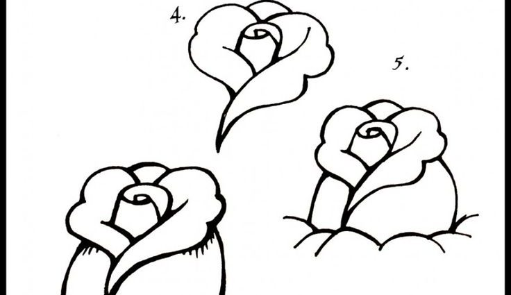 736x425 Easy Drawing Step By Step Flowers How To Draw Roses Step Step