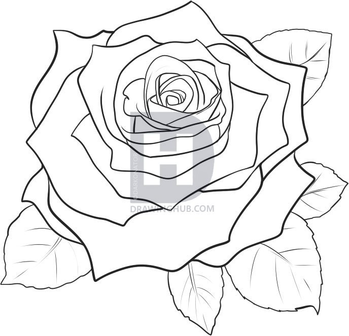688x663 How Draw A Rose Step By Step Realistic How