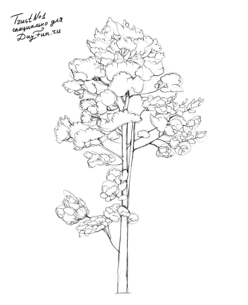 850x1045 How To Draw Realistic Pine Trees Step By Step