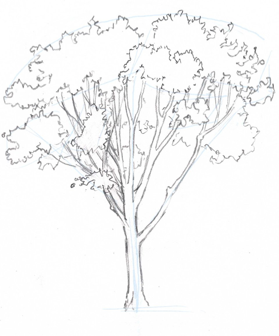960x1155 Learn How To Draw Trees In This Simple Step By Step Demonstration