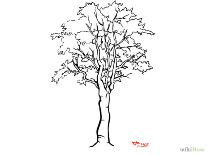 670x503 Draw A Detailed Tree Nature Drawing And Artist