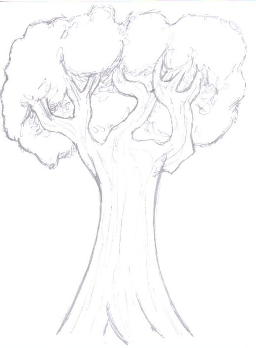 520x707 Drawing Trees How To Draw A Tree Step By Step Hubpages