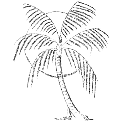 400x400 How To Draw Palm Trees In Front Of The Sun Drawing Lesson